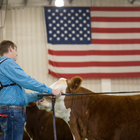 4-H / FFA Livestock Show