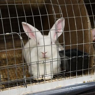 Poultry-rabbits