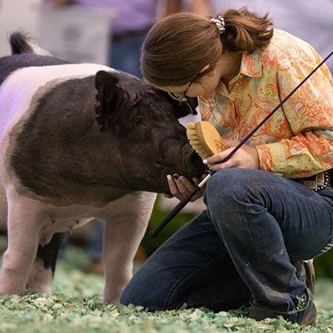 Kansas State Fair to have 2020 Special Edition Livestock Show