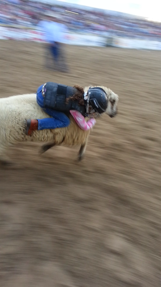Leia Jade Oakerson riding on sheep during Mutton Bustin Event.