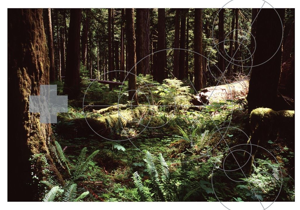 A painting the forest.  Thick with trees, the narrow piece of light hits a fallen trunk overgrown wiht young plants.  Ferns cover the forest floor.  The painting is covered by geometric circles and a large plus sign.