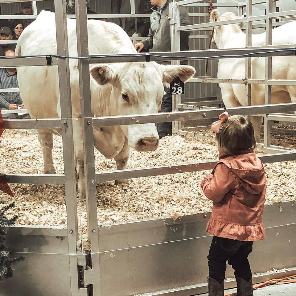 Charolais Barn Improvements