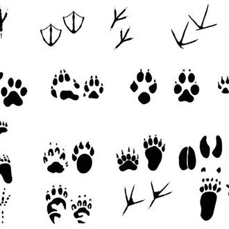 Identifying Animal Tracks And Scat