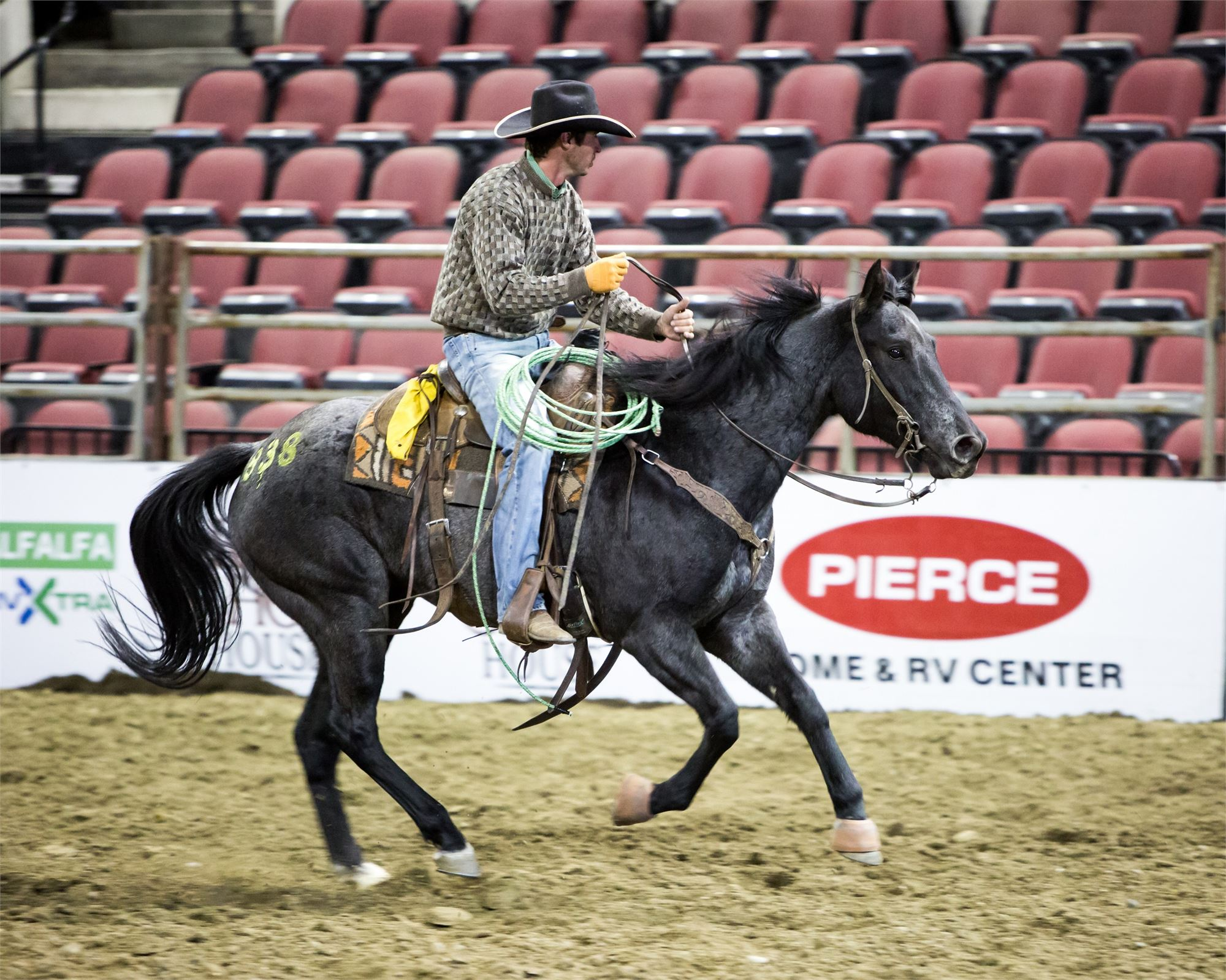 Gold Buckle Select Horse Sales