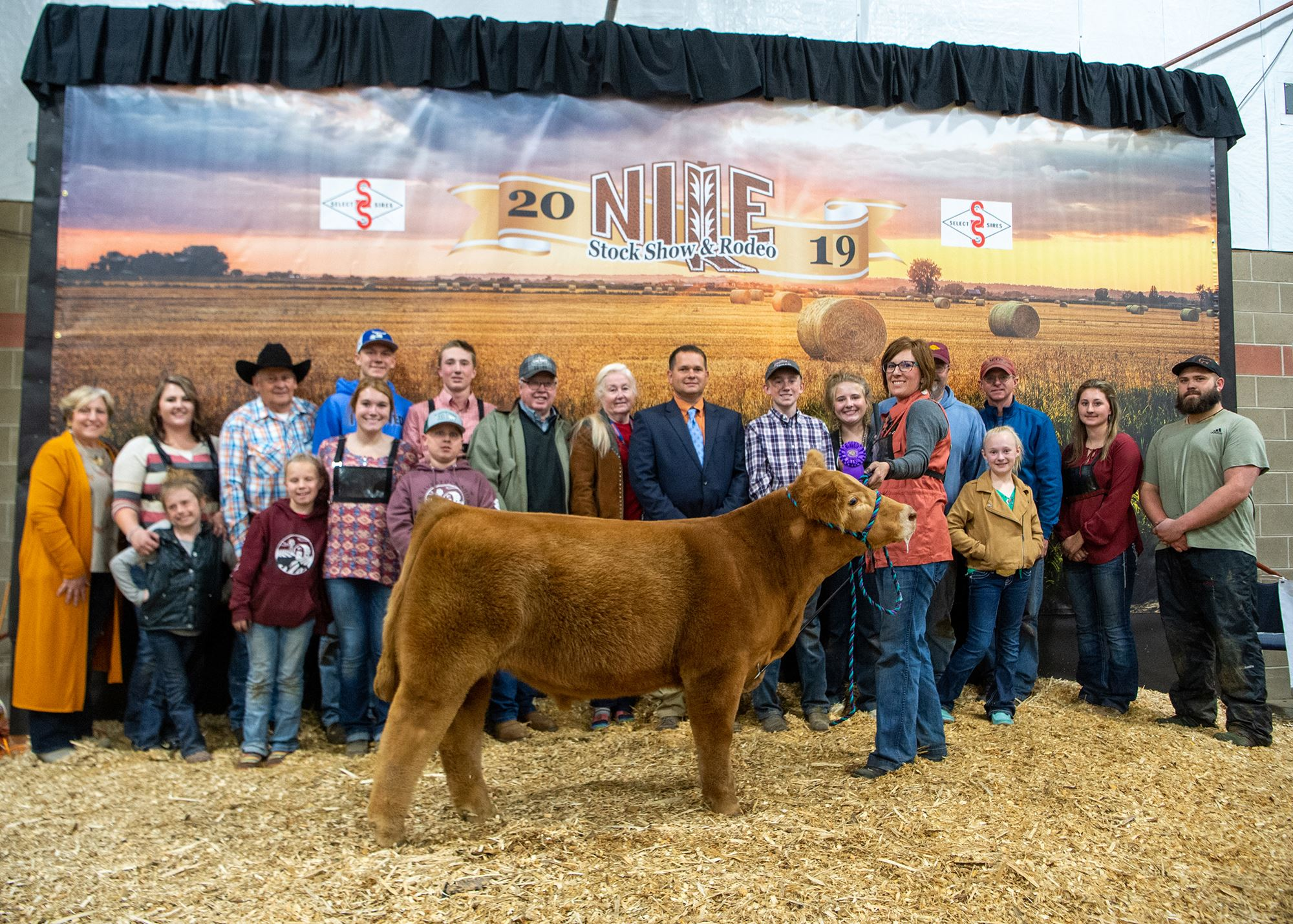 Champion Club Calf Steer