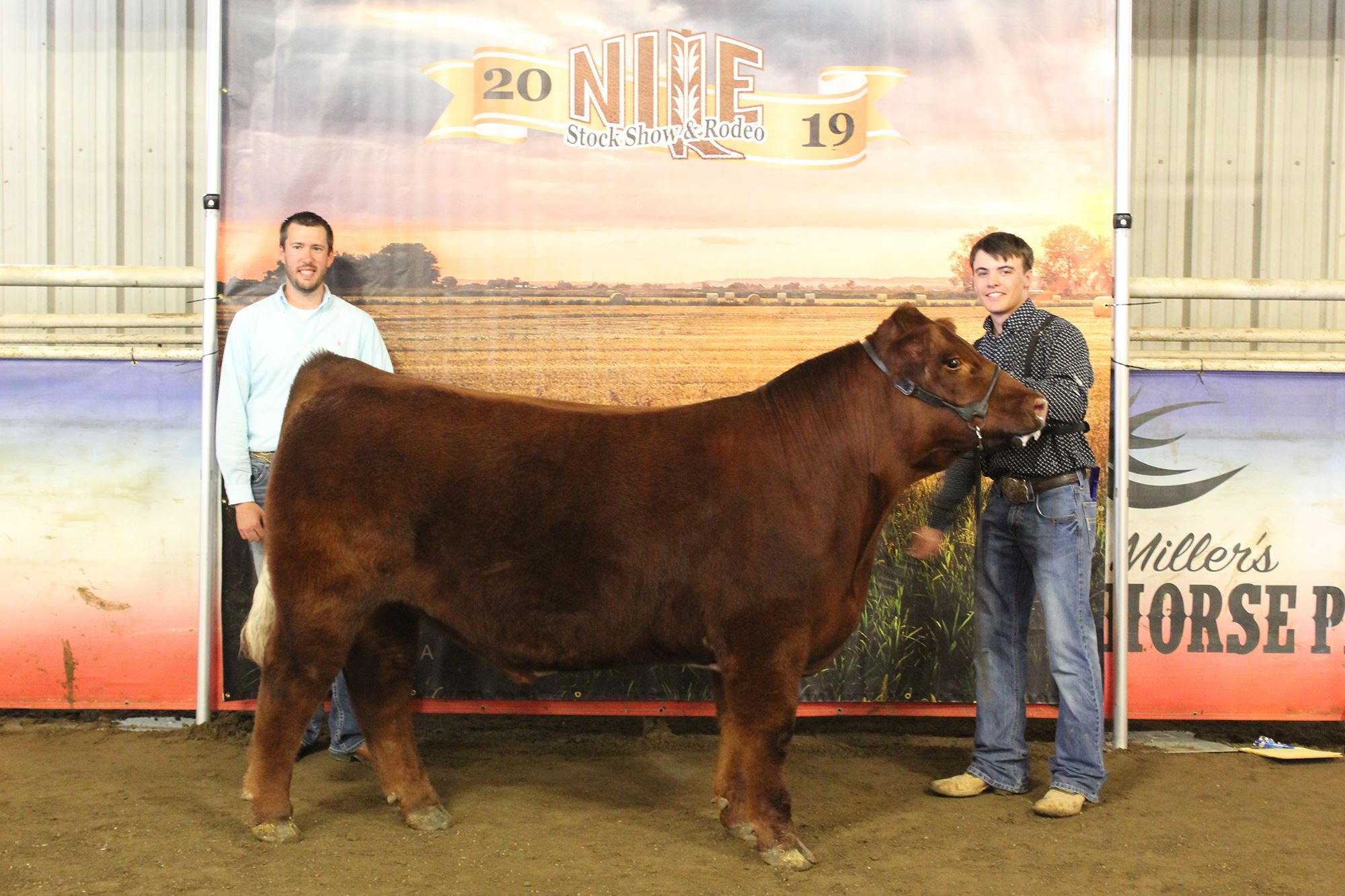 Champion NILE Club Calf Futurity Steer