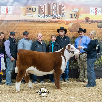 Champion Hereford Female
