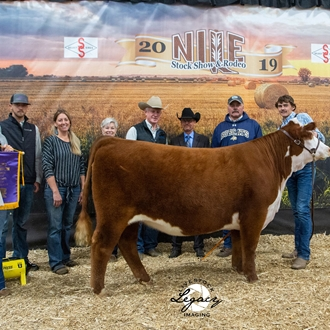 Champion Jr. Hereford Heifer