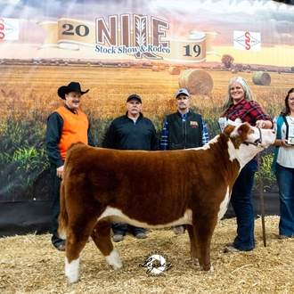 Champion Miniature Hereford Female