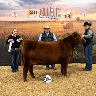 Champion Jr Red Angus Female