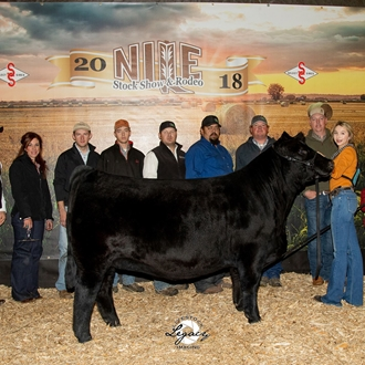 Champion Jr. Simmental Female