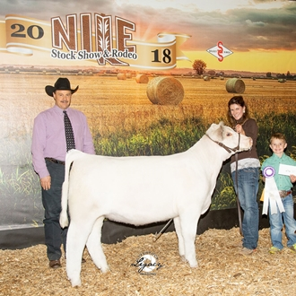 Champion Purebred Shorthorn Female