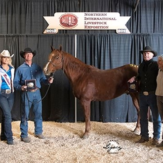 2019 High Selling Performance Horse