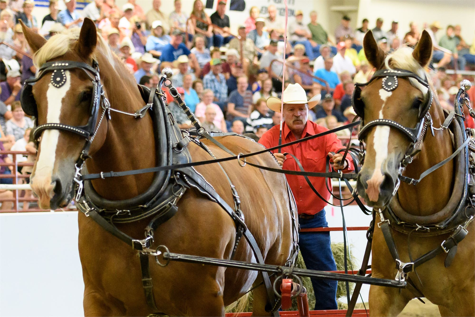 Draft Horse Hitch Show - Aug 24