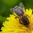 Chippewa Valley Beekeepers