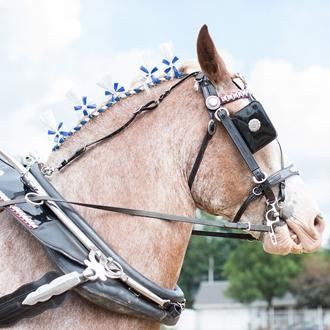 Draft Horse Show