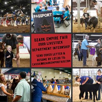 2019 Ozark Empire Fair livestock exhibitors show their prized animals during the fair.