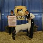 3rd Lamb