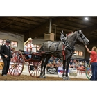Draft Horse Hitch Performance