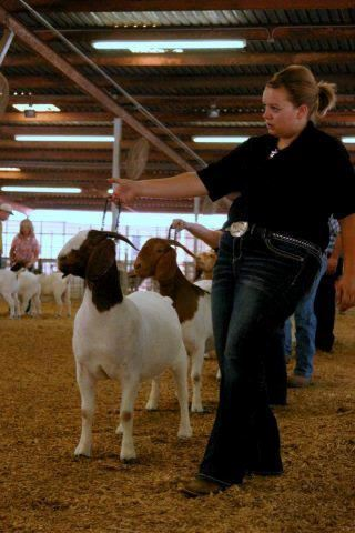 Young lady in a black shirt and jeans showing her goat