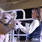 A girl shows her cattle in the sale ring