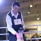 A young man positions his sheep in the sale ring