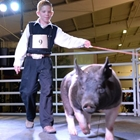 A young man leads his hog around the sale ring