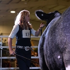 A young woman positions her cow in the show ring