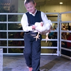 A young man shows off his broiler in the show ring