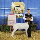 Reserve Goat