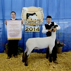 Reserve Lamb