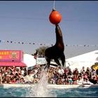 Sea Lion Splash Show