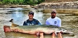 Garzilla Alligator Gar Guide Services