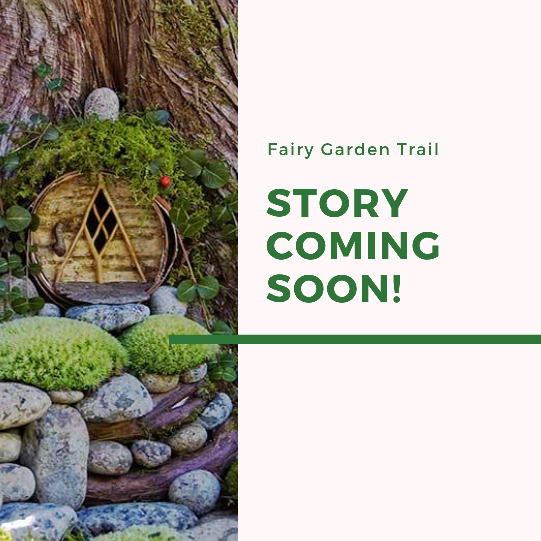 B & C Fairy Garden