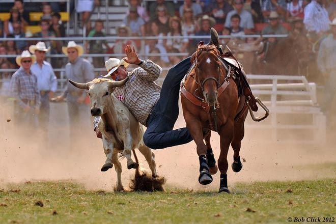 Slack Tie Down Roping Steer Wrestling