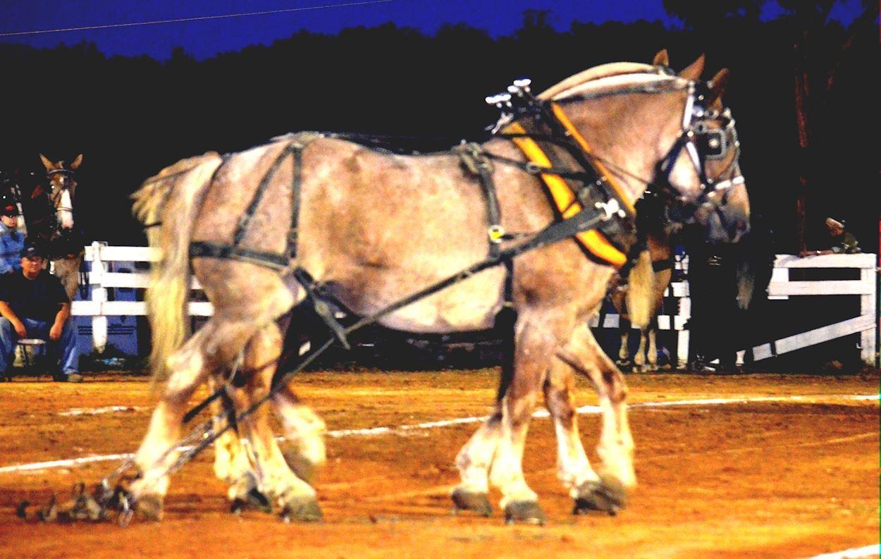 Draft Horse Pull