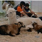 Freckle Farms Petting Zoo