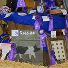 Various 4-H and FFA Best of Show exhibits