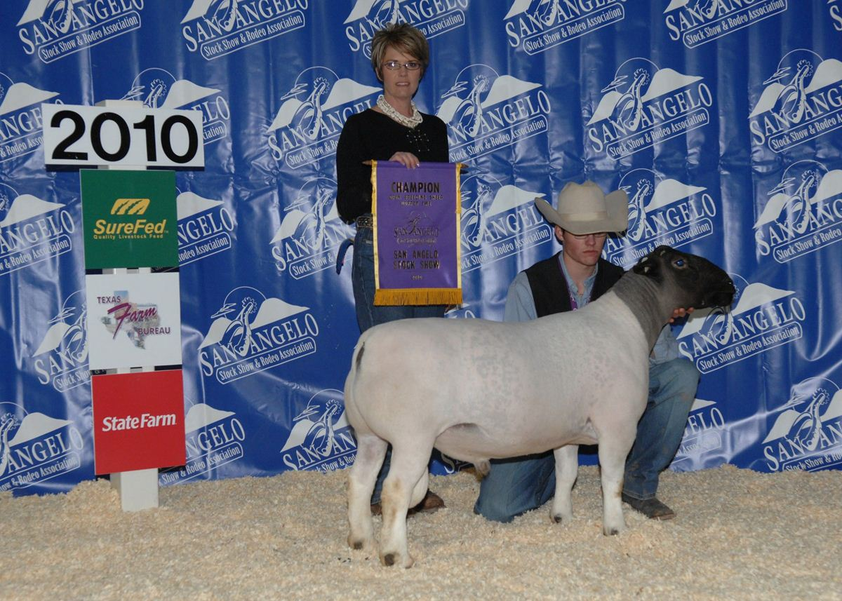 Open Breeding Sheep Show