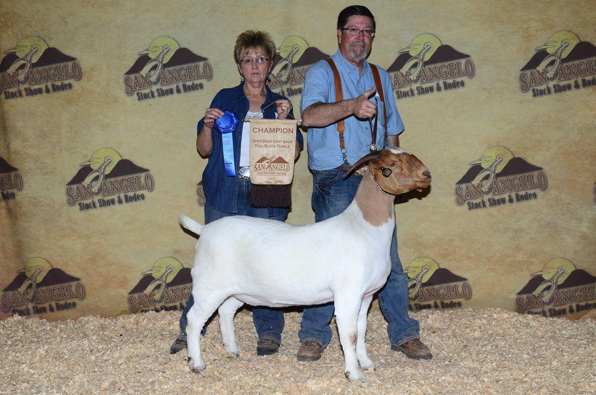 Open Boer Goat Show