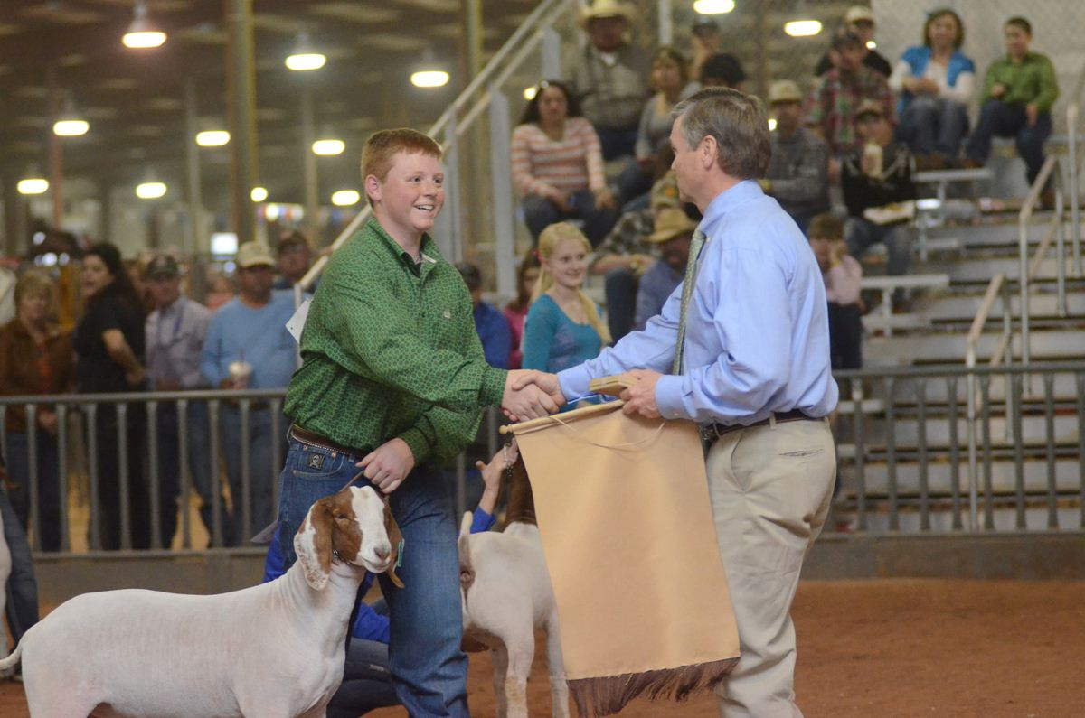 Junior Wether Goat Show