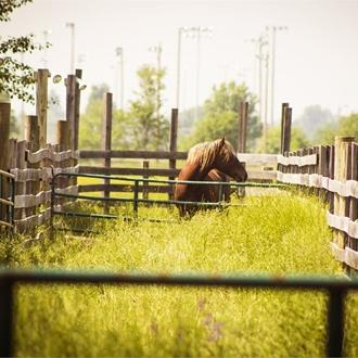 Buckin' Horse - 5/18/13