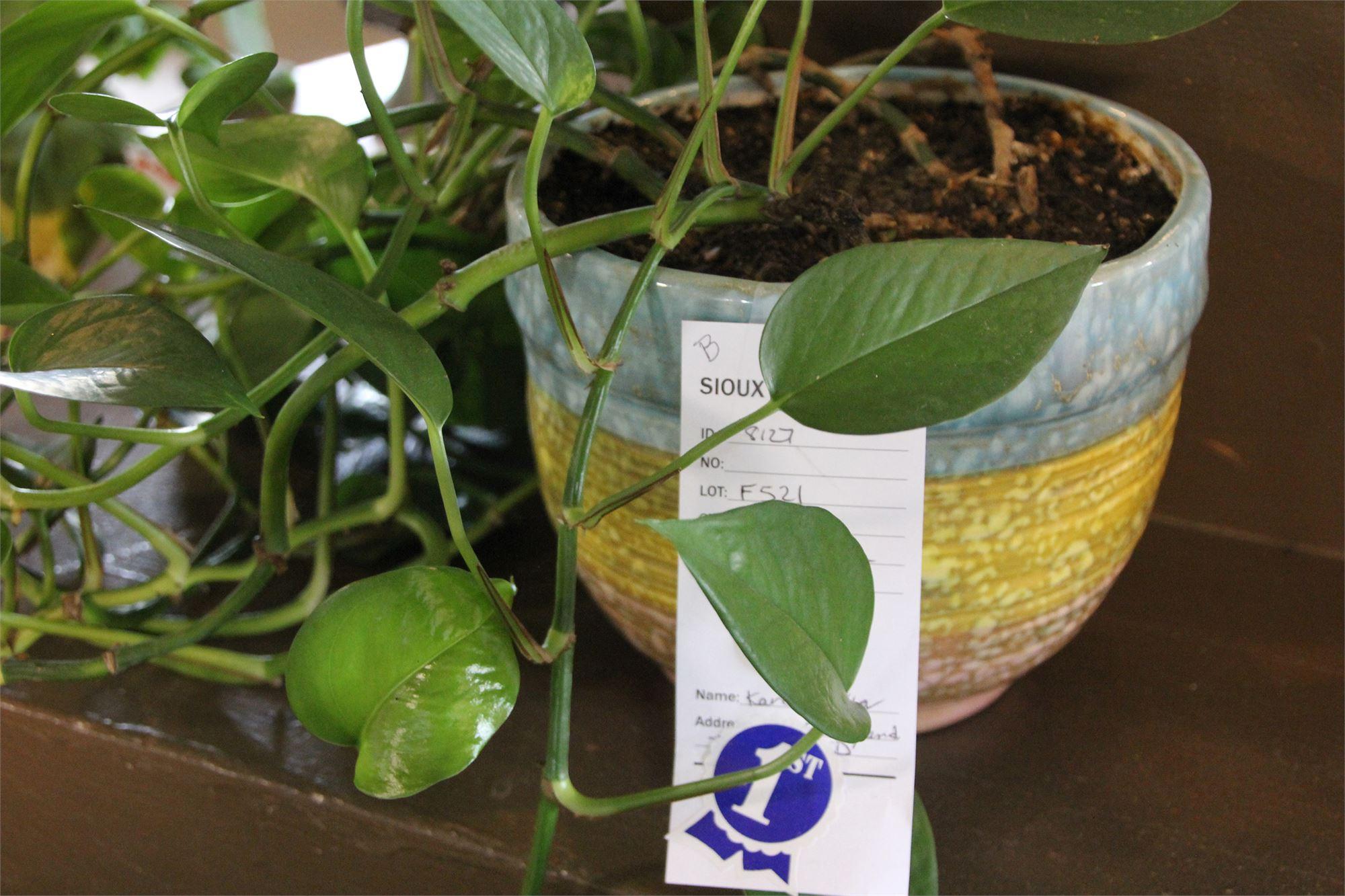 Floriculture, Plants, Vines