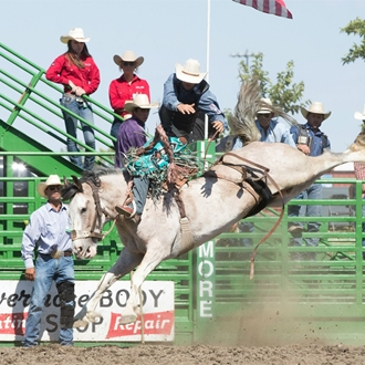 Capone Bucking Horse at St. Paul Rodeo
