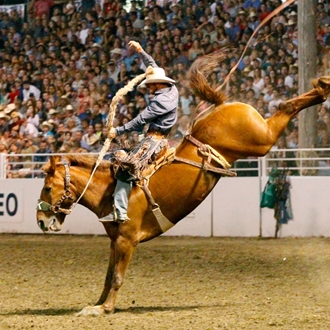 Used Jeff Smith Saddles