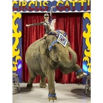 Circus Gatti - 2012