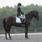 North East Virginia Dressage Competition