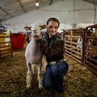 Livestock Competitions