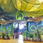 Bugology