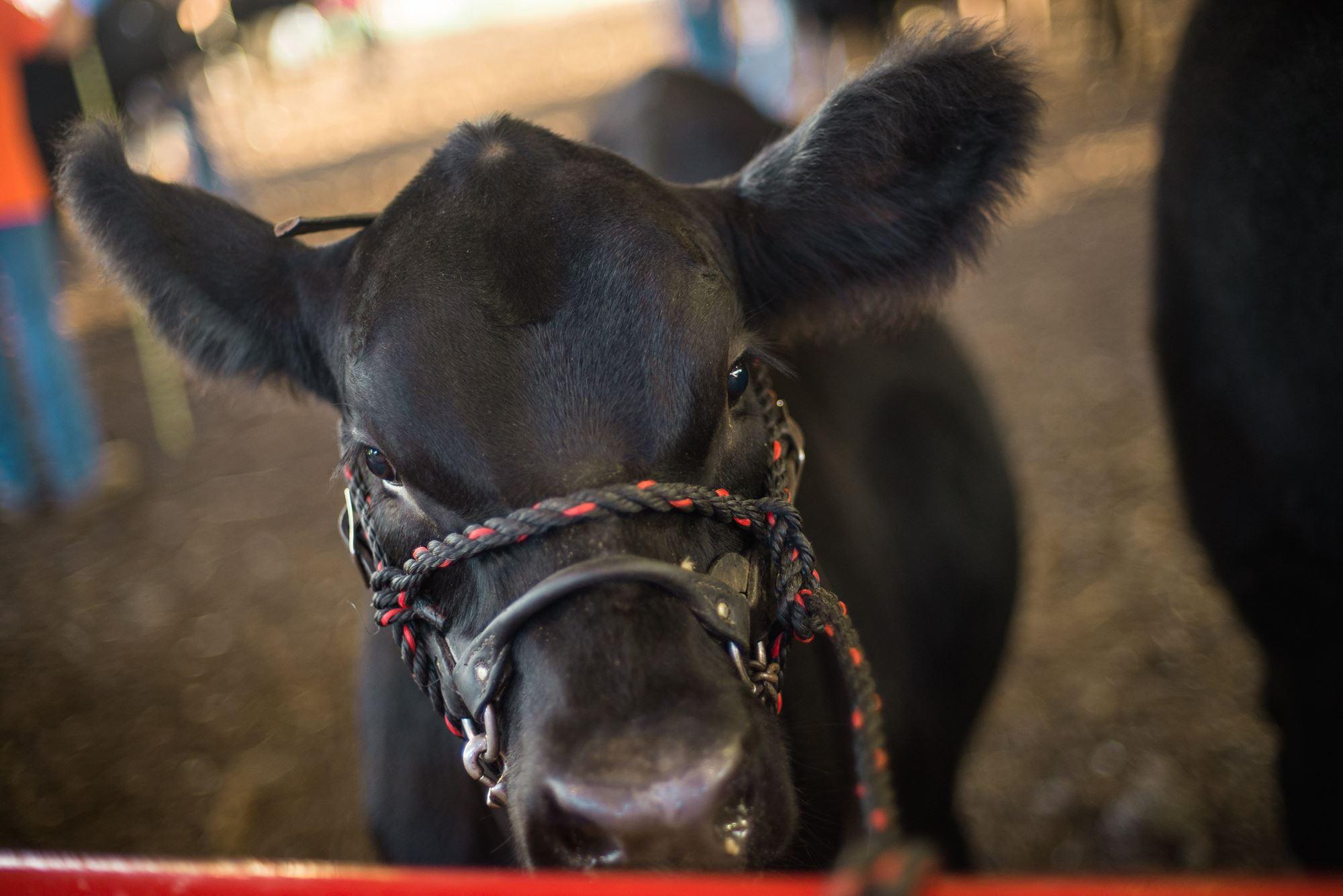 Livestock Exhibitors